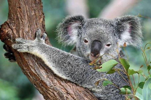 Australia-Destination.Kuranda.jpg