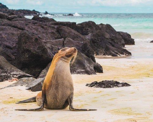 destinations-galapagos-amy-perez-w55TgHidHoE-unsplash-Galapagos Islands, Ecuador 1 (1).jpg